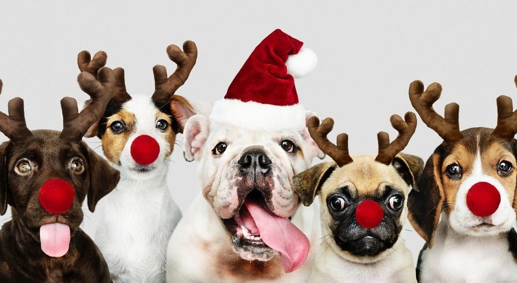 A Bulldog Christmas!